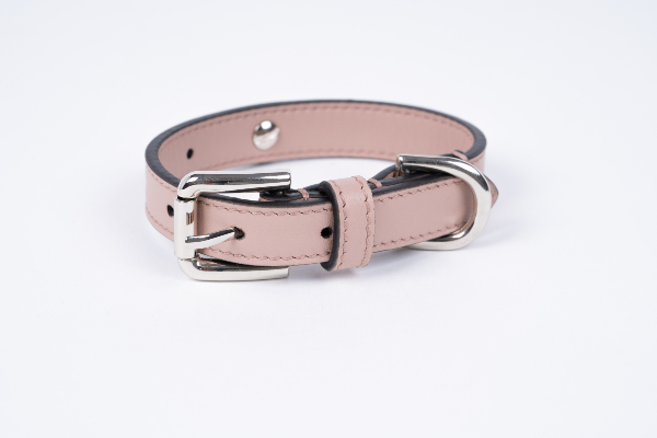 Dovico Firenze presents chic accessories for dogs